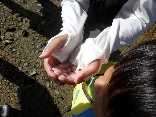 沖縄ツアー 蟹