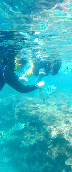 海の下 魚